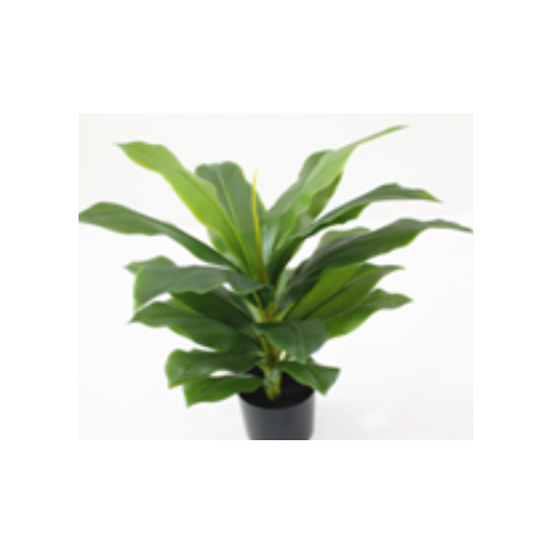 Artificial Dracaena Fragrans Tree - 60cm